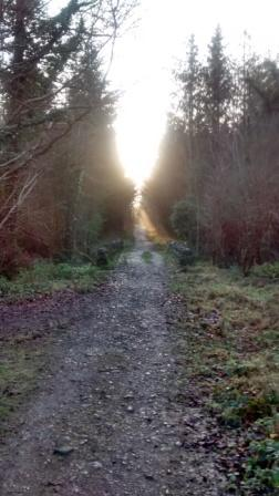Forest Walk, Durrow, Co.Laois